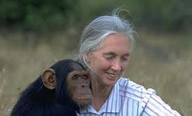 Highlights from the Happiness and Its Causes conference - 16th June : Jane Goodall